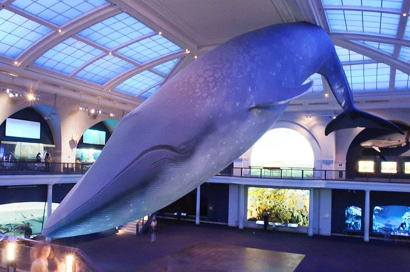 800px-Marine_Life_Hall,_American_Museum_of_Natural_History_(7356570628).jpg